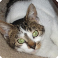 Adopt A Pet :: Billie-Jo - Colmar, PA