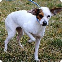 Adopt A Pet :: BIRDIE - Washington, DC