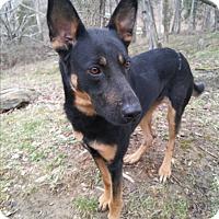 Adopt A Pet :: Delilah - Louisville, KY