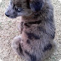 Adopt A Pet :: Hershey - Waller, TX