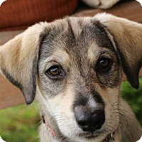Adopt A Pet :: Skye - Aubrey, TX