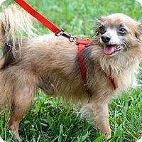 Adopt A Pet :: Taz - Batavia, OH