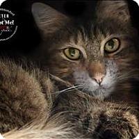 Adopt A Pet :: Dexter - Abbotsford, BC