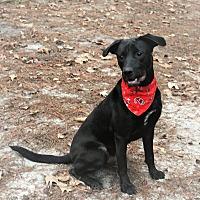 Adopt A Pet :: Kody - Jesup, GA