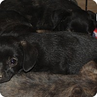 Adopt A Pet :: Sheryl - Ridgecrest, CA
