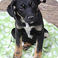 Adopt A Pet :: Miranda Hobbes - Wytheville, VA