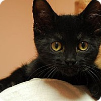 Adopt A Pet :: Mary - Lunenburg, MA