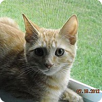 Adopt A Pet :: Juliene - Riverside, RI