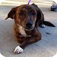 Adopt A Pet :: Saffron - Ocala, FL