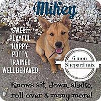 Adopt A Pet :: Mikey (PENDING) - Dearborn, MI