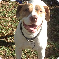 Adopt A Pet :: arthur - Santa Ana, CA