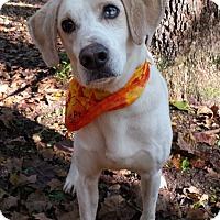 Adopt A Pet :: Jake - Capon Bridge, WV