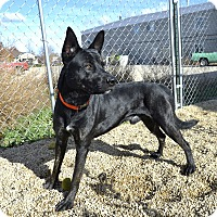Adopt A Pet :: Ogden - Meridian, ID