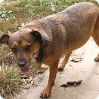Adopt A Pet :: Cinderella - Georgetown, KY