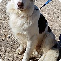 Adopt A Pet :: OSCAR - San Pedro, CA