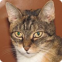 Adopt A Pet :: Jinx - New Windsor, NY