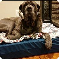 Adopt A Pet :: Greycee - Hazard, KY
