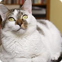 Adopt A Pet :: Betsy - Homewood, AL