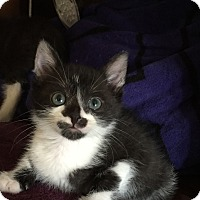 Adopt A Pet :: Pippin Pepperpots - Burbank, CA