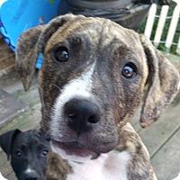 Adopt A Pet :: Buster Brown - Cincinnati, OH