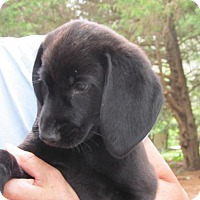 Adopt A Pet :: Levi - Ball Ground, GA