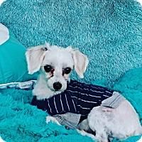 Adopt A Pet :: Jamie - Covina, CA