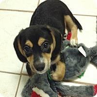 Adopt A Pet :: Stitch - San Ysidro, CA