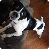 Adopt A Pet :: Bessie - Savannah, GA