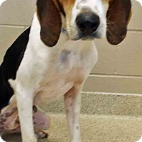 Adopt A Pet :: Rob - Plainfield, IL