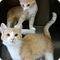 Adopt A Pet :: Shine - Chippewa Falls, WI