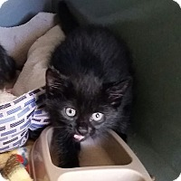 Adopt A Pet :: Baloo (in CT) - Manchester, CT