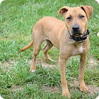 Adopt A Pet :: Daisy - Batavia, OH