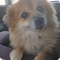 Adopt A Pet :: POSH - Los Angeles, CA