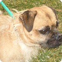 Adopt A Pet :: Buddy D-51819 - Westampton, NJ