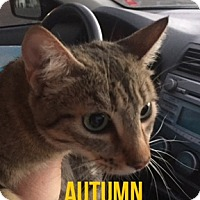 Adopt A Pet :: AUTUMN - Glendale, AZ