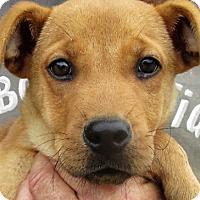 Adopt A Pet :: Danny - Germantown, MD