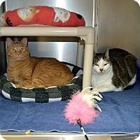 Adopt A Pet :: Devin & Gabriel - Wheaton, IL