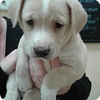 Adopt A Pet :: Aja - Thousand Oaks, CA