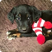 Adopt A Pet :: Hank - SOUTHINGTON, CT