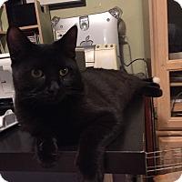 Adopt A Pet :: Frankie - Toronto, ON