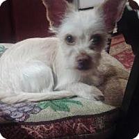 Adopt A Pet :: Toby - Turlock, CA