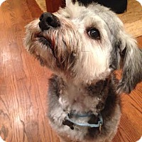 Adopt A Pet :: Crespo - Alpharetta, GA