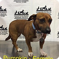 Adopt A Pet :: Pumpkin - Waycross, GA