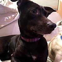 Adopt A Pet :: Java - Tijeras, NM