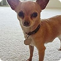 Adopt A Pet :: Tess-Adoption pending - Bridgeton, MO