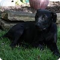Adopt A Pet :: Gypsey - Staunton, VA