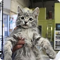 Adopt A Pet :: singelton - Santa Monica, CA