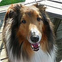 Adopt A Pet :: Buddy - Charlottesville, VA