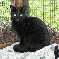 Adopt A Pet :: Gina - Dover, OH