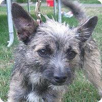 Adopt A Pet :: Clara - Tumwater, WA